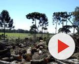 Desmatamento coloca Paraná entre os primeiros em atos infracionários na questão de preservação da mata nativa. (Arquivo: Blasting News)