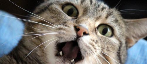 Chat comment le calmer lorsqu'il est stressé?