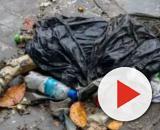 Perna foi encontrada em lixo. (Divulgação)