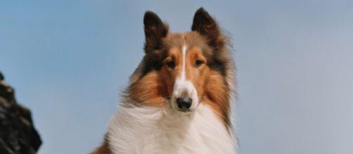 A Italia sì il racconto di Erik, il cane scappato di casa per cercare il padrone.