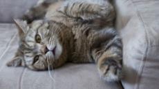 Chat : 5 astuces imparables pour qu'il ne fasse plus ses griffes sur le canapé