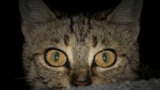 De fermer la porte à l'ignorer, que faire pour ne plus être réveillé par son chat
