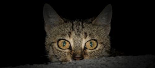 chat: comment faire pour passer une nuit paisible
