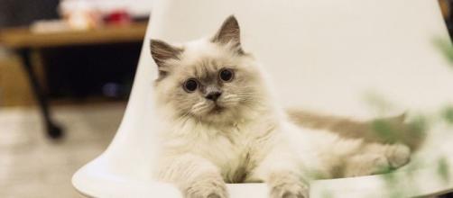 chat: il ne suffit pas simplement de lui dire 'Je t'aime' pour qu'ils nous aiment en retour