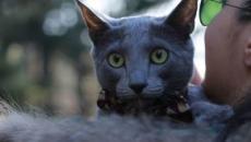 Le chat serait un médicament naturel qui aurait des bienfaits pour la santé