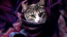 Offre d'emploi: une société recherche des personnes pour câliner des chats toute la journée