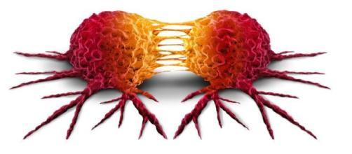 La liberazione fisiologica di L1CAM, in un tessuto lacerato da una ferita, potrebbe essere alla base della formazione delle metastasi.