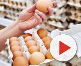 Uova Conad e Amadori ritirate dal mercato per contaminazione batterica.