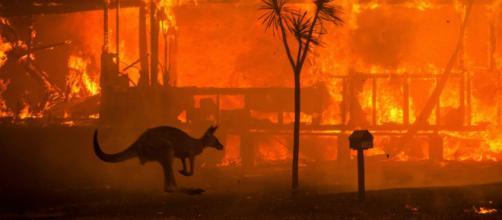 Prejuízos materiais e incalculáveis na fauna e flora da Austrália, devido aos grandes incêndios. (Arquivo Blasting News)