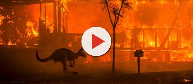 Fogo sem controle na Austrália chega às grandes cidades e aumenta emissão de gás carbônico