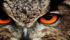 7 animais e o significado deles quando aparecem em sonhos