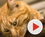 Chat: comment enlever les odeurs de pipi