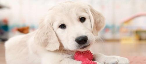 La higiene en el hogar y en los recipientes de comida protege a los perros de enfermedades parasitarias. - monederosmart.com