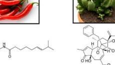 Resiniferatossina, il 'superpeperoncino' efficace nel controllo delle aritmie cardiache