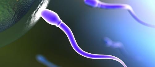 Espermatozoides cultivados en laboratorio.