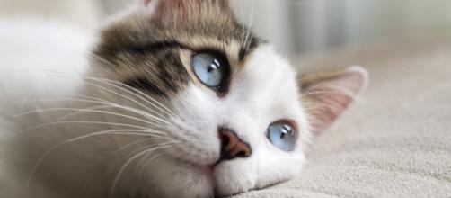 Los gatos siguen ganando terreno como las mejores mascotas para la familia en muchos países. - rexpetcare.com