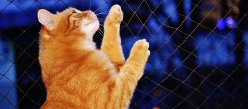 chat: 5 astuces imparables pour le faire rentrer à la maison