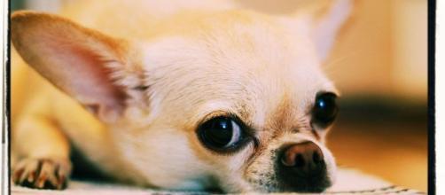 Il piccolo cane è stato ucciso a colpi di scopa.
