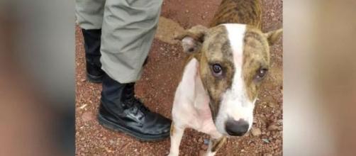 Cachorro afugentou agressor. (Divulgação Polícia Militar)