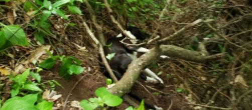 Cachorro ficou quase um mês desaparecido. (Júlio Mesquita/Polícia Militar)