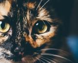 Pourquoi mon chat urine-t-il partout ? - Photo Pixabay