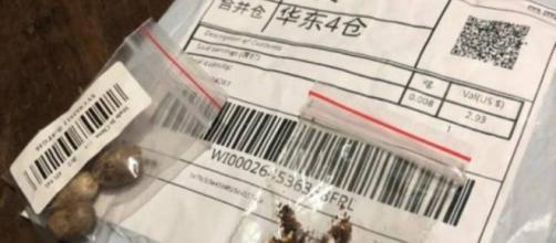 Misteriosas sementes vindo da China preocupam autoridades. (Arquivo Blasting News)