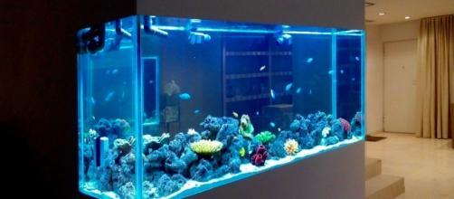 Tener un acuario en casa es un pasatiempo muy relajante