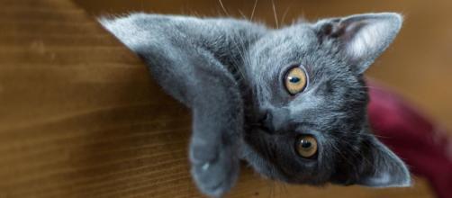 Pourquoi mon chat me suit jusqu'aux toilettes - Photo Pixabay