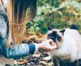 chat : quelques idées recettes maison et gourmandes pour lui faire plaisir - Photo Pixabay