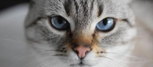 chat ilne faudrait pas lui sourire pour gagner sa confiance - Photo Pixabay