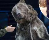 Mosca, il domatore Valentine Bulich è stato sbranato da un orso mentre puliva la sua gabbia.