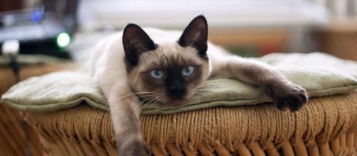 chat : il aurait plusieurs personnalités selon la science - Photo Pixabay