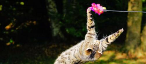 ce chat sauve un enfant photo pixabay