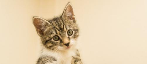 Comment votre chat vous a aidé à vivre un meilleur confinement ? - Photo Pixabay