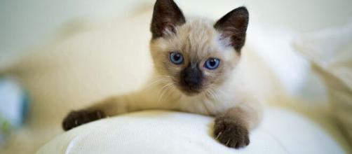 Comment jouer avec son chat ? Nos conseils et astuces - Photo Pixabay