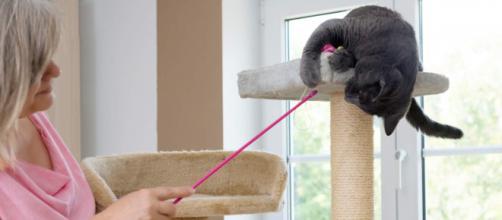 Como fazer arranhador para gatos com papelão. (Arquivo Blasting News)