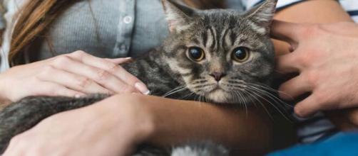 Saiba como ensinar seu gato a não morder e deixá-lo mansinho - com.br