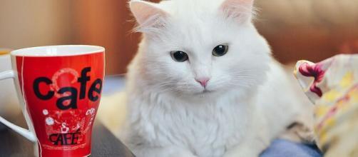 Pourquoi mon chat fait toujours tomber des objets ? Photo Pixabay