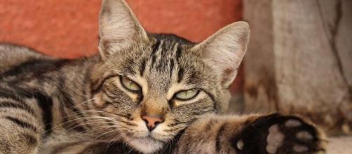 chat comment et réagir quand il est malade ? Photo Pixabay
