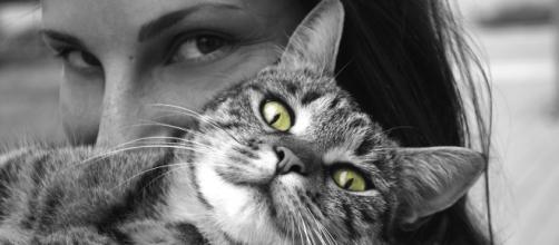 Pourquoi mon chat n'aime pas mes câlins ? - Photo Pixabay