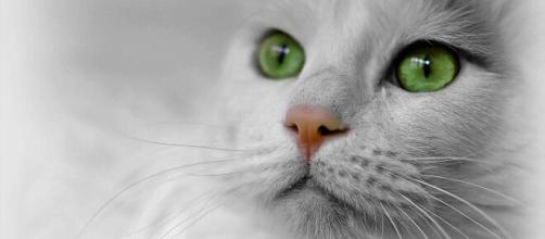 A quoi serve les moustaches de votre chat ? - Photo Pixabay