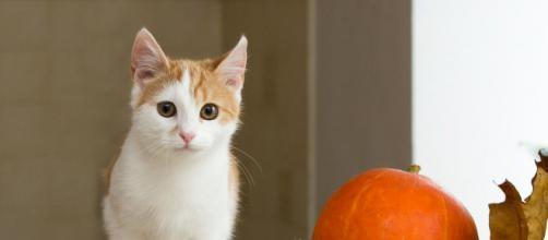 Pourquoi mon chat me suit partout ? - Photo Pixabay