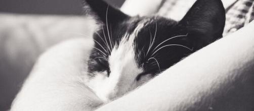 chat : s'il dort dans votre lit ce n'est pas seulement par confort - Photo Pixabay