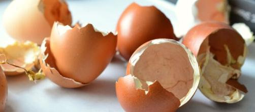 Las cáscaras de huevo son un gran fertilizante para la tierra