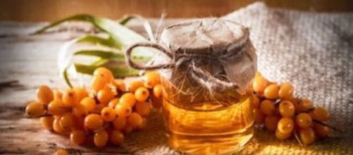 El espino amarillo tiene alto contenido en antioxidantes