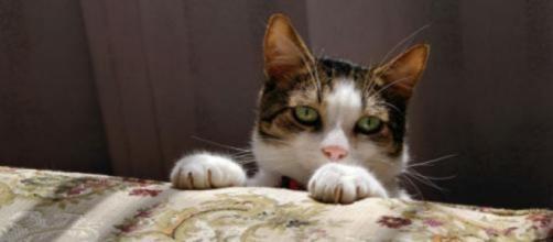 Pourquoi mon chat dort entre mes jambes ? - Photo Pixabay