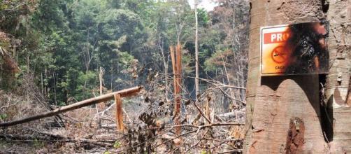 Bolsonaro afirma que vai mostrar uma lista de nomes de países que compram madeira extraída da Amazônia. (Arquivo Blasting News)
