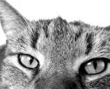 Comment savoir si mon chat est malheureux ? Photo Pixabay