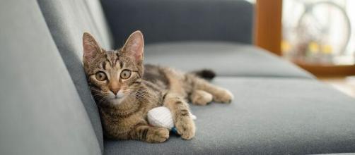 chat ces choses qu'il déteste chez vous - Photo Pixabay