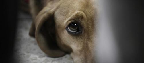 La aplicación AlertCops permite ya comunicar delitos de maltrato animal.